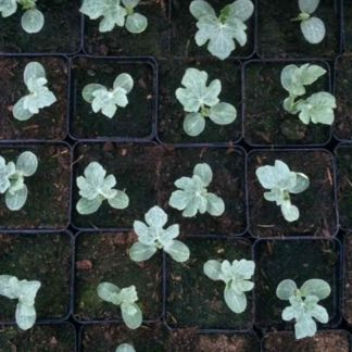 Moestuinplantjes